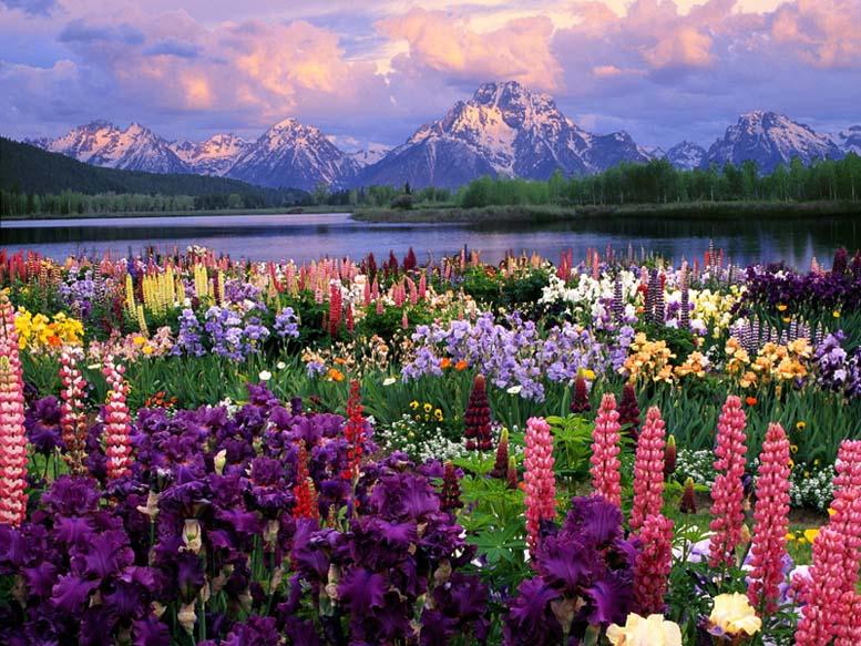 Пейзажи природы с цветами и