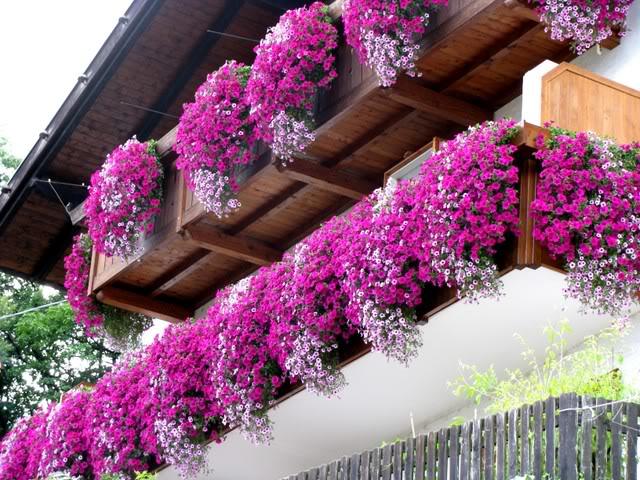 Цветы на балконе название коллекция изображений.